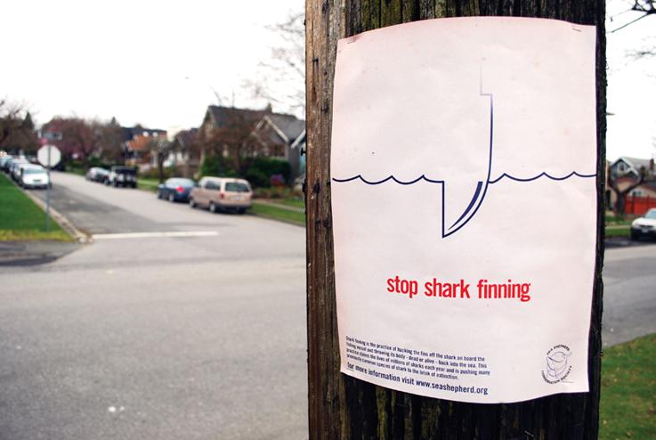 Shark   Shark Finning Awareness Poster