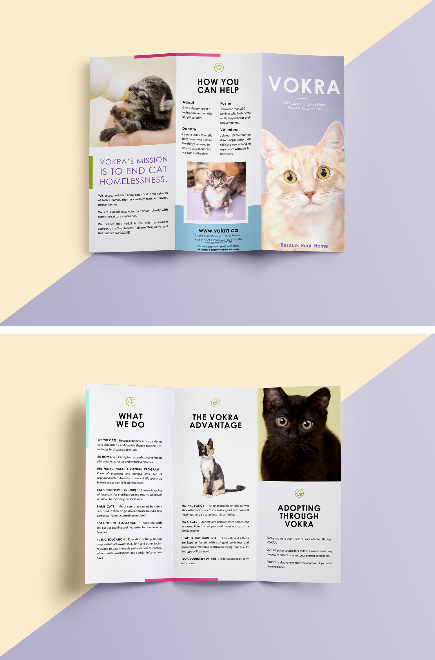 Trifold layout design for Vokra (Vancouver Orphan Kitten Rescue Association). Cat photography by Tania Hennessy, design by Alicia Carvalho   www.alicia-carvalho.com